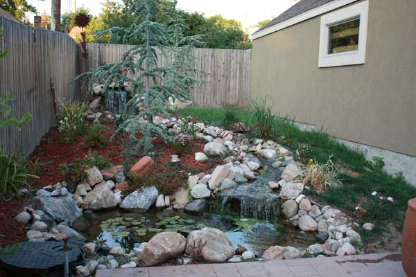 McClelland-backyard