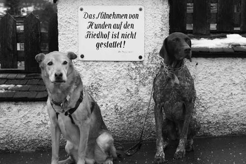 Kitzbuhel-no-dogs-sign